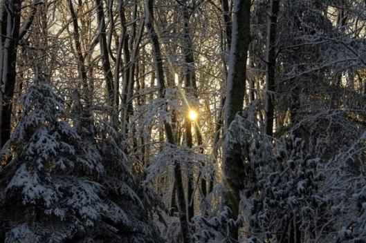 A hint of light. © Cheryl Fuller Sparks