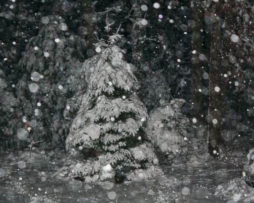 Christmas tree in the storm. © Cheryl Fuller Sparks