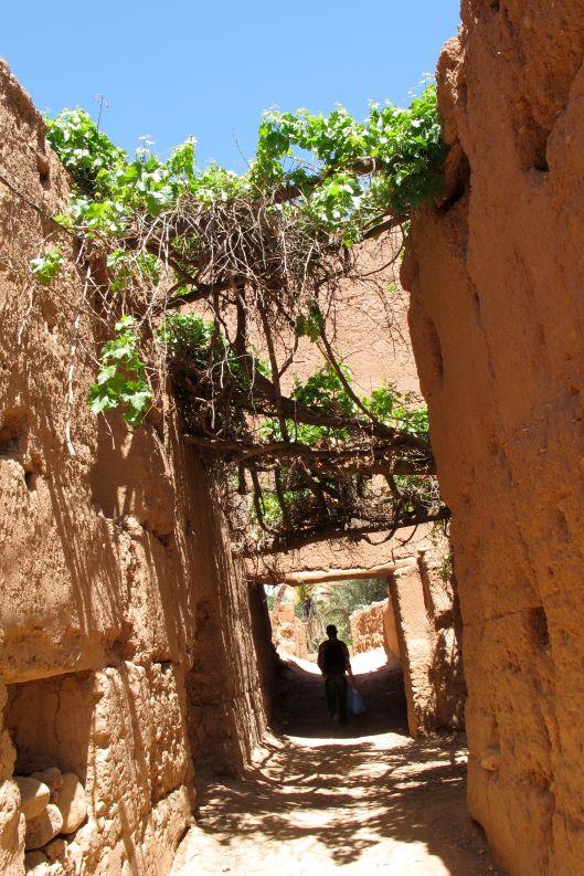 5-undergrapevine