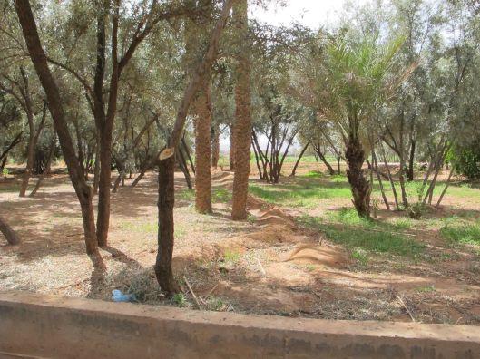 6-oasis trees