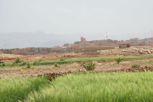 Desert wheat
