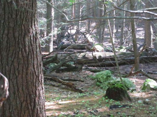 woods2-moss
