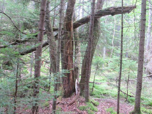woodsyladder