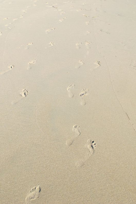 Footprints ©Judith A. Ross