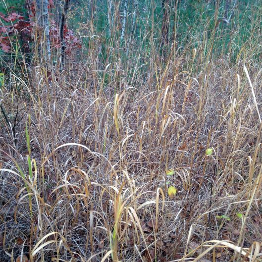 vertical grasses