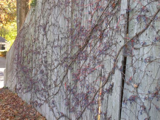 espalier_long