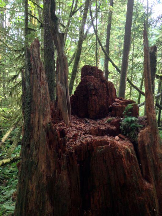stump_rustic