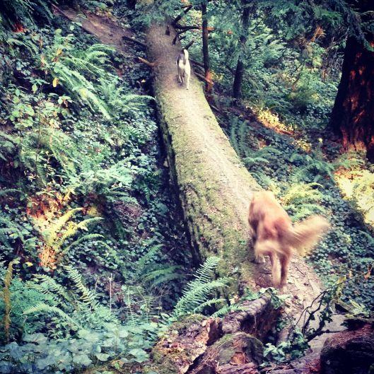 Log walkers